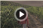 vineyard video sprite