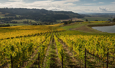 Willakia_Vineyard_2.jpg