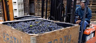 winemaking_1_small.jpg