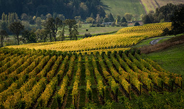 Willakia_Vineyard_1.jpg