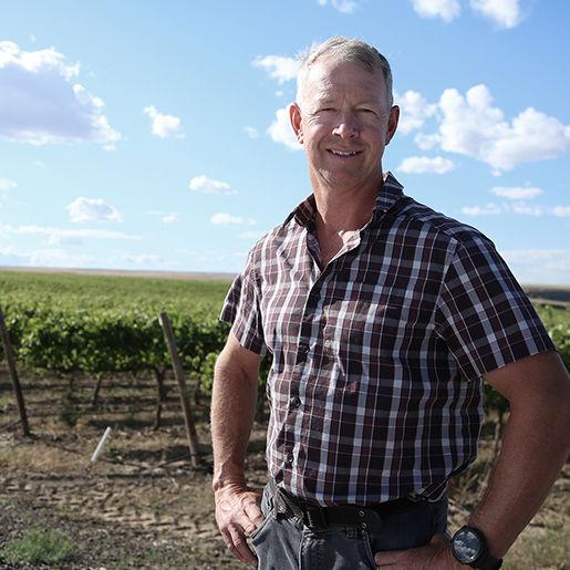 Mercer Vineyards