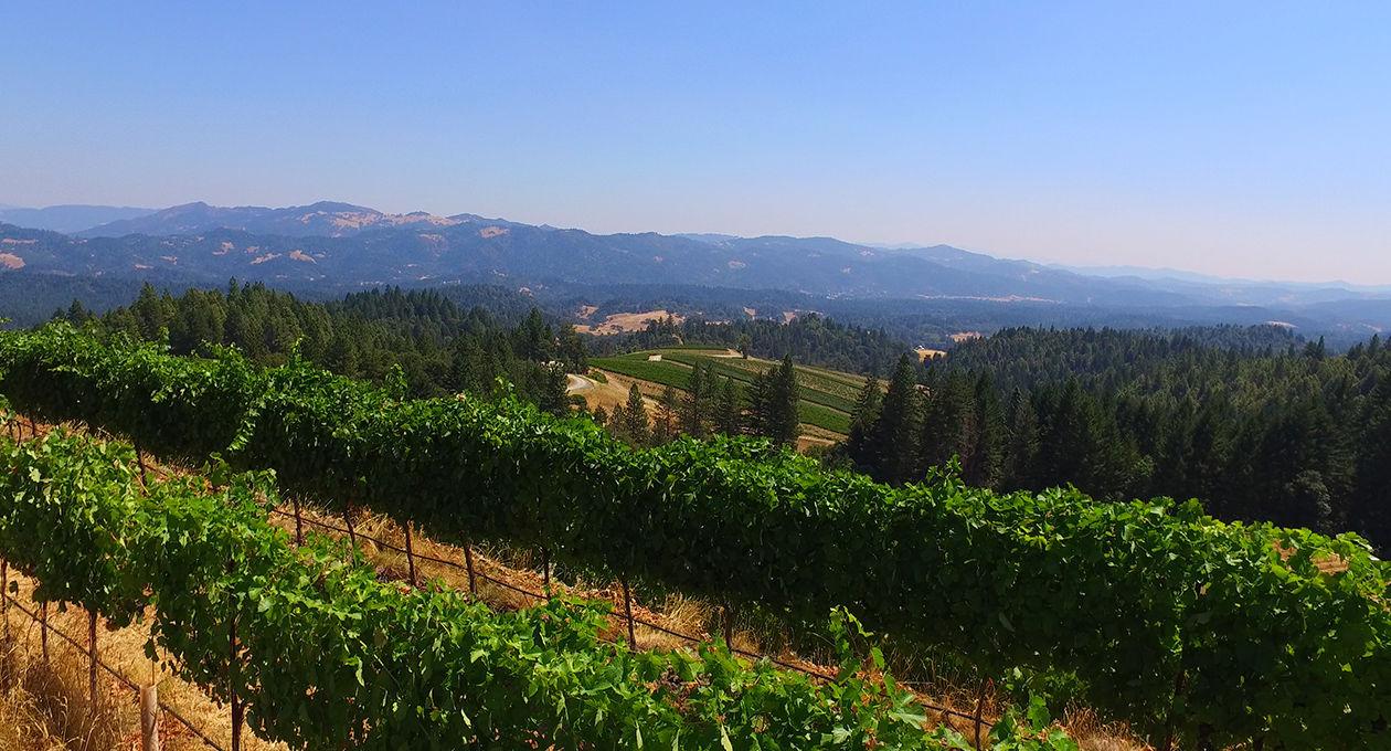 03_2_HERO_alder_springs_vineyard.jpg