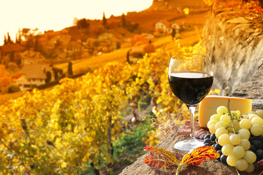 A glass of red wine with vineyard in autumn