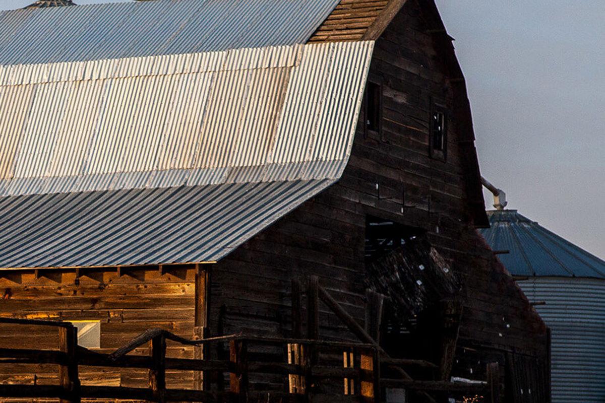 Young Barn