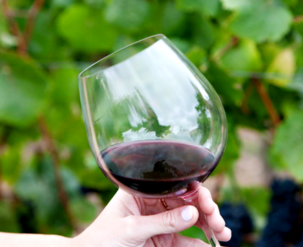 A glass of red wine in a Burgundy held against a leafy background